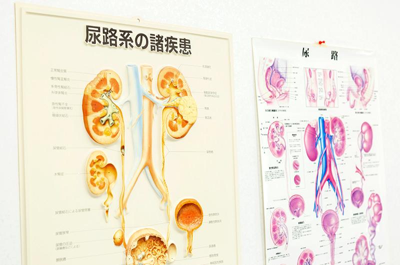 急性 腎盂 腎炎 読み方
